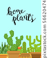 Vector illustration with cacti in pots in flat style with Home Plants lettering on plain background 56620474