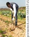 Male weeding scallion plants 56630715