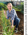 Woman caring for green vegetables 56630803