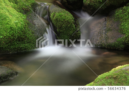 Mossy Valley, Gangwon Province 56634376
