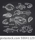 Vector hand drawn seafood elements on black chalkboard set 56641120