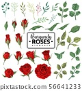 Red roses. Garden burgundy rose flowers, floral bouquets with buds and green leaves for wallpaper 56641233