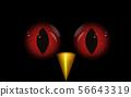 Owl's eyes at night 56643319
