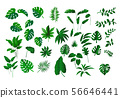 Tropical leaves collection 56646441