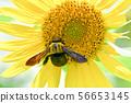 蜜蜂和向日葵 56653145