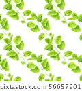 Seamless pattern with mint plant 56657901