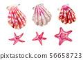 Set of sea shells of scallops and sea stars. 56658723
