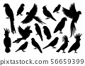 Parrot silhouettes on white background 56659399