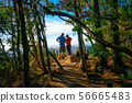 Trekkers hiking in forest of Tasmania, Australia. 56665483