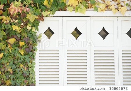 White shutters surrounded by greenery 56665678