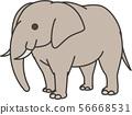 elephant 56668531