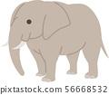 elephant 56668532