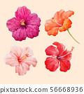 Watercolor hibiscus illustrations vector set 56668936