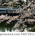 Cherry blossom (hanami) in Kyoto, Japan 56672811