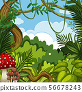 Background scene with green trees in forest 56678243