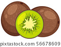 Two fresh kiwi fruits in whole and one cut in half 56678609