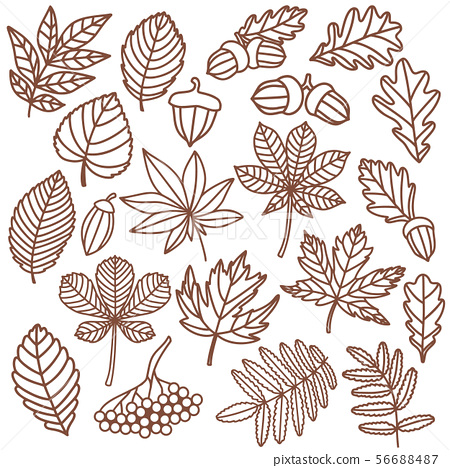 Isolated Autumn Leaves In Hand Drawn Doodle Style Stock Illustration 56688487 Pixta