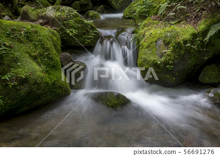 Mossy Valley, Gangwon Province 56691276