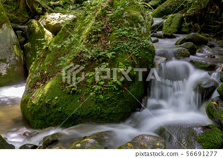 Mossy Valley, Gangwon Province 56691277