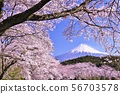 일본의 봄 후지산과 벚꽃 56703578