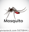 Vector of a mosquito design on white background. 56708441