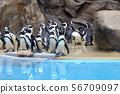 Penguin 56709097
