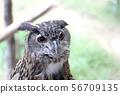Owl 56709135