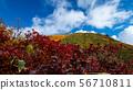 Tanigawa-dake of autumn leaves 56710811