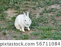 토끼 56711084