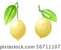 레몬 56711107