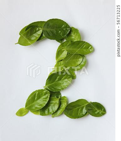 나뭇잎 56713225