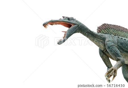 Dangerous Spinosaurus isolated on white 56716430