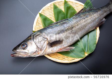 鈴木魚 56716976