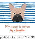 French Bulldog. Cute Cream or Fawn Frenchie. 56719699