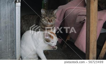 고양이 두마리 56723499