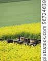 養蜂業(蜂窩和油菜) 56724639