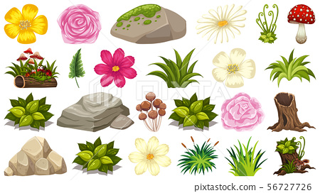 Set of plant and nature elements on white 56727726