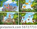 Set of various animals in nature scenes 56727733