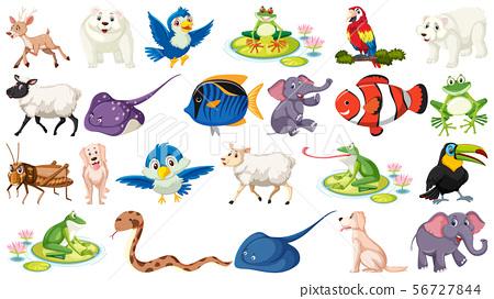 Set of fish and wild animals 56727844