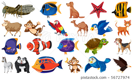 Set of different kinds of fish and birds 56727974