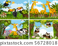 Set of various animals in nature scenes 56728018