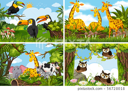 Set of various animals in nature scenes 56728018