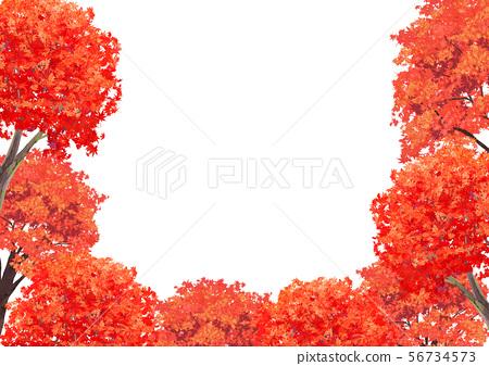 단풍 나무 프레임 56734573