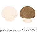 버섯 mushroom 56752759
