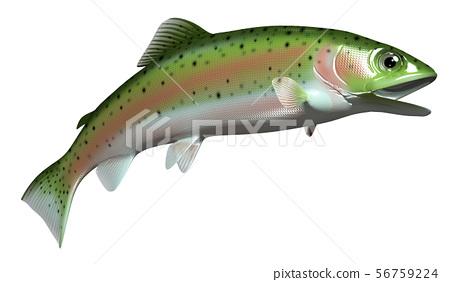 Rainbow trout 56759224