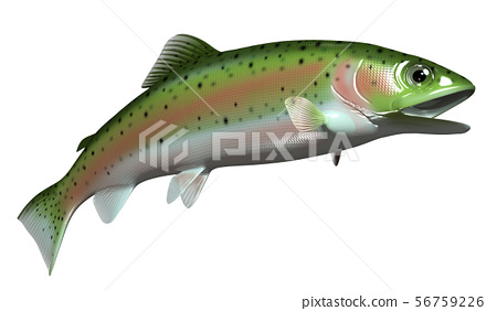 Rainbow trout 56759226