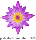 top view purple lotus isolated on white background 56766929