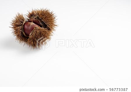 Chestnut 56773387