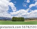 [北海道美瑛]夏天北海道圖像丘陵,樹木和藍天 56782593