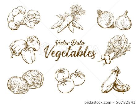 手繪插畫素材:蔬菜套,鋼筆劃 56782843